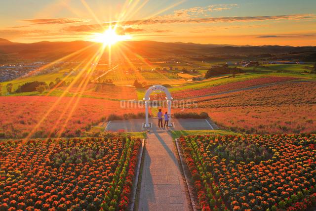 マリーゴールドとラベンダーの花畑と上富良野町俯瞰と夕日の写真素材 [FYI01510296]