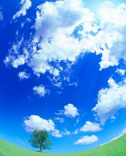 牧草地と木立と太陽の光芒の写真素材 [FYI01510330]