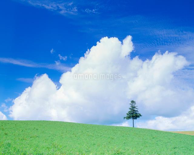 牧草地と木立の写真素材 [FYI01510348]