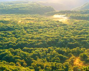 朝の新緑のブナ林俯瞰の写真素材 [FYI01510371]