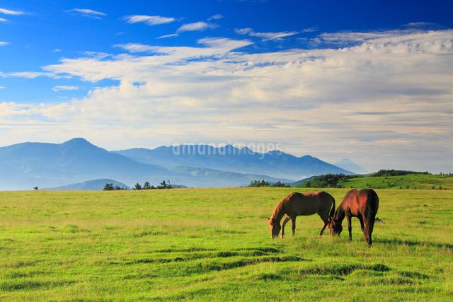 馬のペアと八ケ岳と富士山などの山並みの写真素材 [FYI01510460]