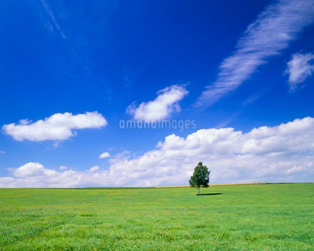 牧草地と木立の写真素材 [FYI01510484]