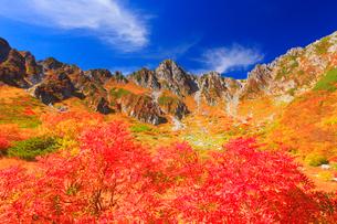 ナナカマドとダケカンバの紅葉と宝剣岳の写真素材 [FYI01510543]