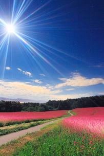 月夜の花咲く赤そば畑のライトアップと道路の写真素材 [FYI01510574]