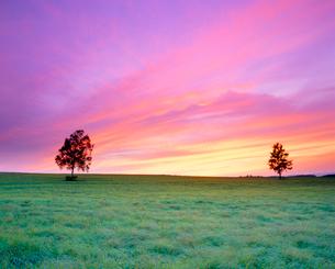 牧草地と木立と夕焼けの写真素材 [FYI01510632]
