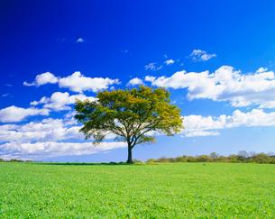牧草地と木立の写真素材 [FYI01510638]