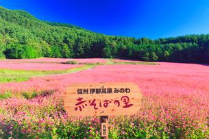 花咲く赤そば畑と赤そばの里の看板の写真素材 [FYI01510659]