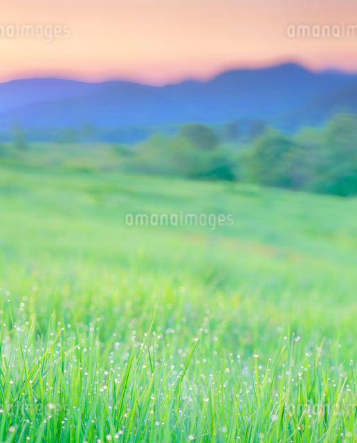 朝の牧草地の写真素材 [FYI01510664]