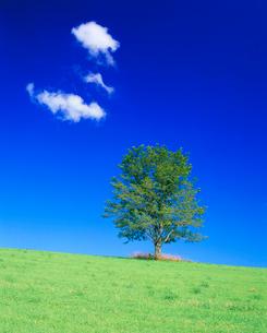 牧草地と木立の写真素材 [FYI01510673]