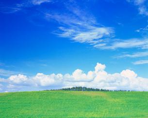 牧草地とカラマツ並木の写真素材 [FYI01510732]