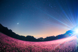 花咲く赤そば畑のライトアップと星空と仙丈ヶ岳など南アルプスの写真素材 [FYI01510834]
