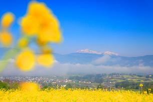 福島の棚田から望む朝霧の雲海と菜の花公園と妙高山の写真素材 [FYI01510873]
