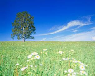 野花咲く牧草地と木立の写真素材 [FYI01511045]