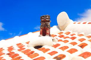 シーサーと琉球赤瓦の屋根の写真素材 [FYI01511128]