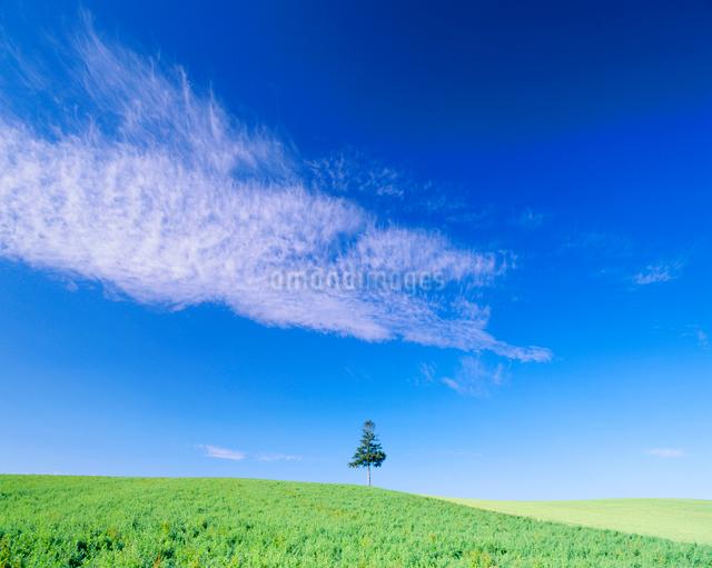 牧草地と木立の写真素材 [FYI01511202]