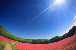 月夜の花咲く赤そば畑のライトアップと道路の写真素材 [FYI01511240]