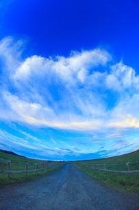 牧場の道と馬と朝焼けの写真素材 [FYI01511253]