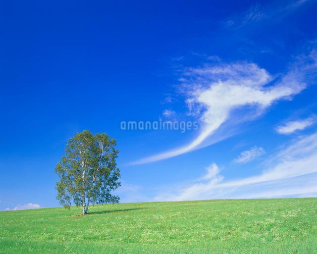 牧草地と木立の写真素材 [FYI01511272]