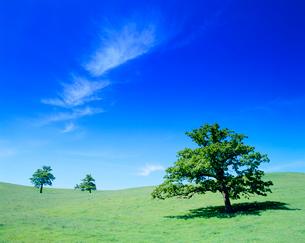 牧草地と木立の写真素材 [FYI01511346]