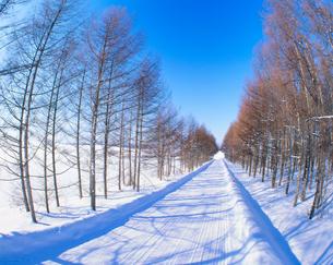 雪道とカラマツ林の写真素材 [FYI01511398]