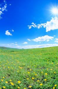 タンポポ咲く牧草地と太陽の写真素材 [FYI01511399]