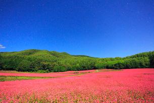 月夜の花咲く赤そば畑の写真素材 [FYI01511405]