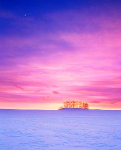 雪原と木立と夕焼けの写真素材 [FYI01511436]