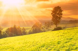 牧草地と木立と夕日の光芒の写真素材 [FYI01511450]