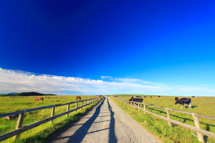 牧場の道とホルスタインと黒毛和牛と馬の写真素材 [FYI01511457]