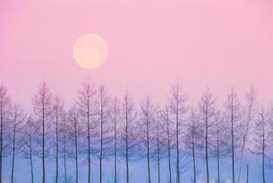 並木と朝の満月の写真素材 [FYI01511478]