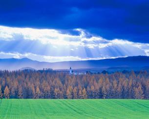 小麦畑の丘と紅葉のカラマツ林と美馬牛小学校の塔,夕景の写真素材 [FYI01511550]