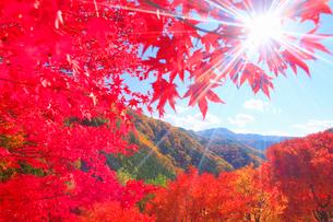 紅葉のモミジの林と木もれ日の光芒と萱野高原方向の山並みの写真素材 [FYI01511594]