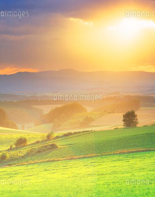 牧草地などの丘と夕日の光芒の写真素材 [FYI01511627]