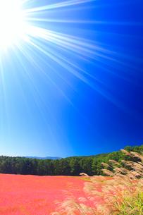 花咲く赤そば畑とススキと太陽の光芒と木曽駒ヶ岳の写真素材 [FYI01511637]