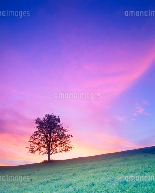 牧草地と木立と朝焼けの写真素材 [FYI01511717]