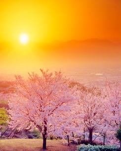ソメイヨシノと夕日と南アルプスの山並みの写真素材 [FYI01511728]