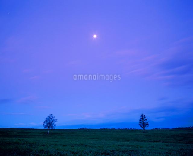 牧草地と木立と朝の月の写真素材 [FYI01511740]