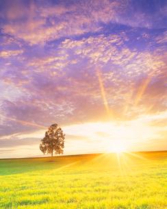 牧草地と木立と夕日の光芒の写真素材 [FYI01511744]