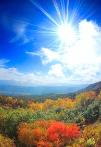 ナナカマドとダケカンバの紅葉と南西方向の山並みと太陽の光芒の写真素材 [FYI01511747]