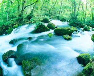新緑の奥入瀬渓流の写真素材 [FYI01511756]