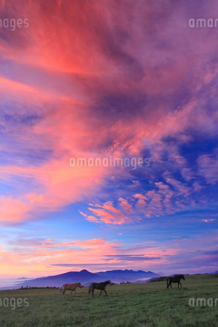 馬と八ケ岳と富士山と蓼科山などの山並みと朝焼けの写真素材 [FYI01511786]