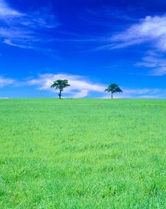 牧草地と木立の写真素材 [FYI01511788]
