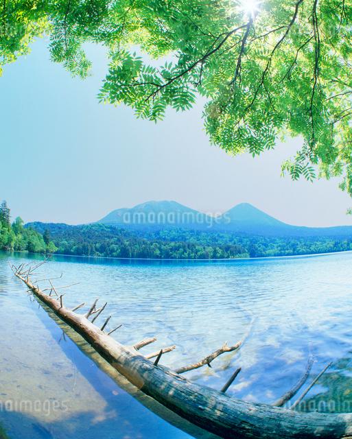 新緑のオンネトーと雌阿寒岳と木もれ日の写真素材 [FYI01511798]