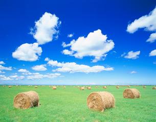 ロールと牧草地の写真素材 [FYI01511815]
