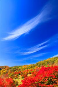 紅葉のモミジなどの樹林と秋空の写真素材 [FYI01511839]