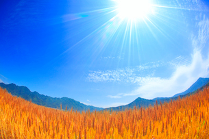小麦畑と太陽の光芒と独鈷山と夫神岳と女神岳の写真素材 [FYI01511856]