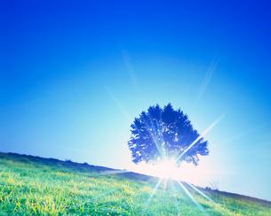 牧草地と木立と朝日の木もれ日の光芒の写真素材 [FYI01511861]