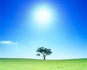 牧草地と木立と太陽の写真素材 [FYI01512006]