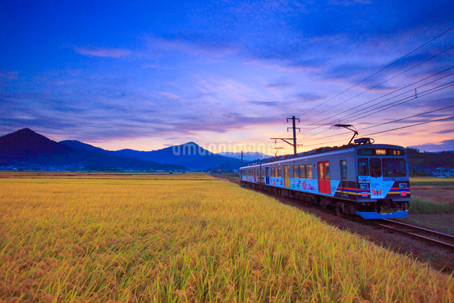 別所線の電車と稲穂実る田園,夕景の写真素材 [FYI01512012]