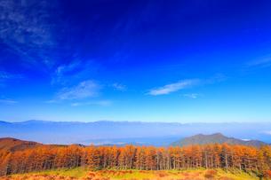 紅葉のカラマツ林と松本市街と穂高連峰など北アルプスの山並みの写真素材 [FYI01512029]